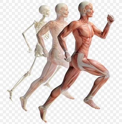 Lihaste ja uhiste probleemide Ajuliigese ravi