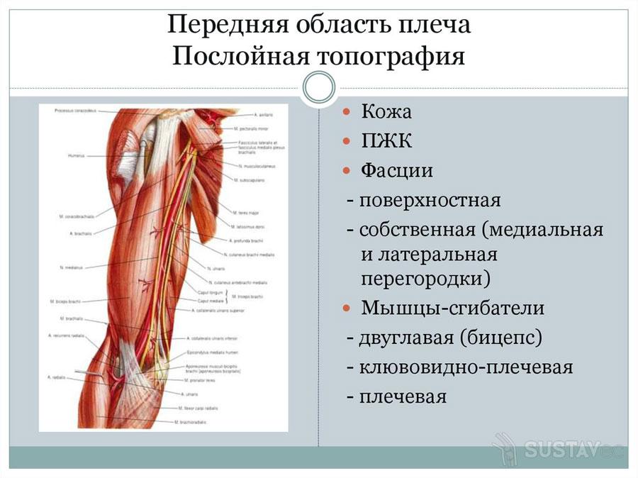Abikaasa lihaste kuunarnuki Sustav Artrohi liigeste olaravi