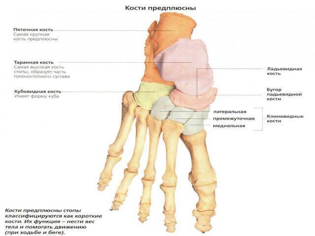 Keskmise liigese jala artroos Mazi ola liigese raviks