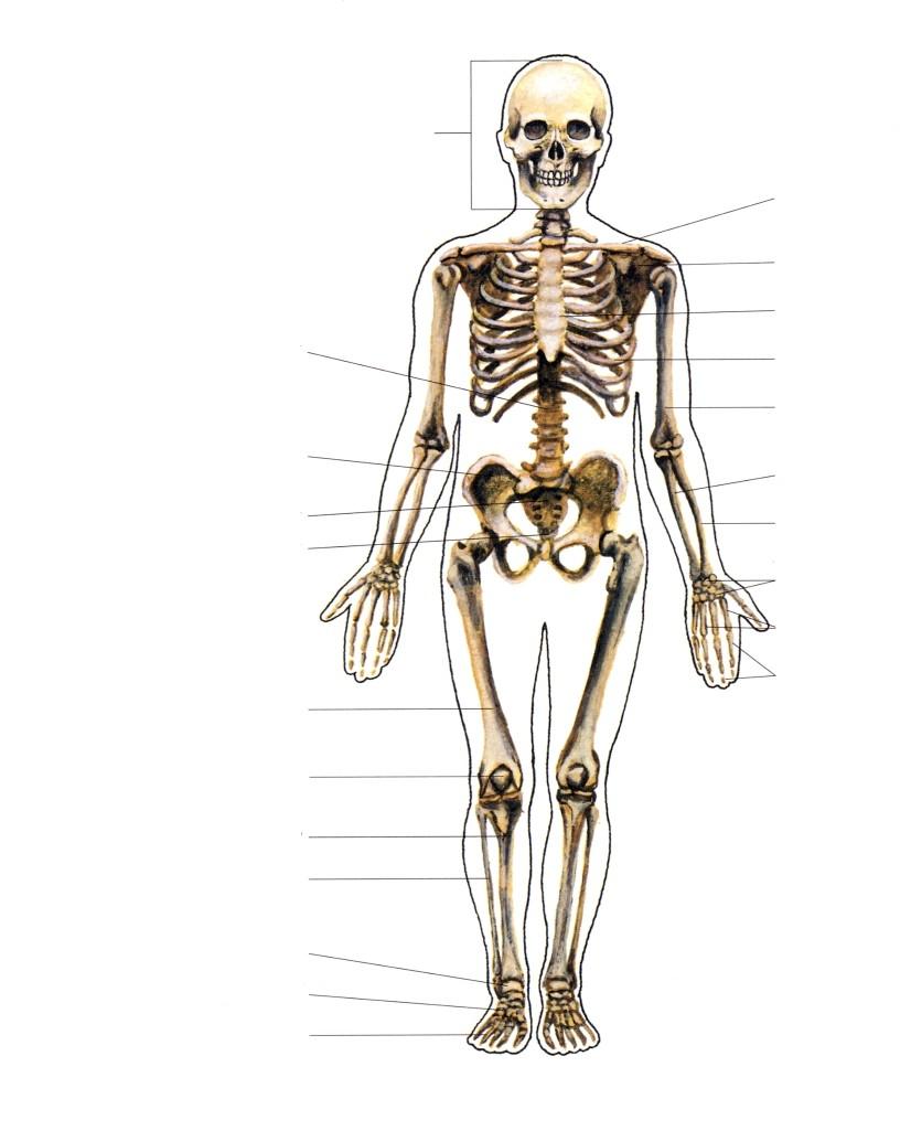 Kolju liigeste poletik Harjade liigeste osteoartroosi ravi