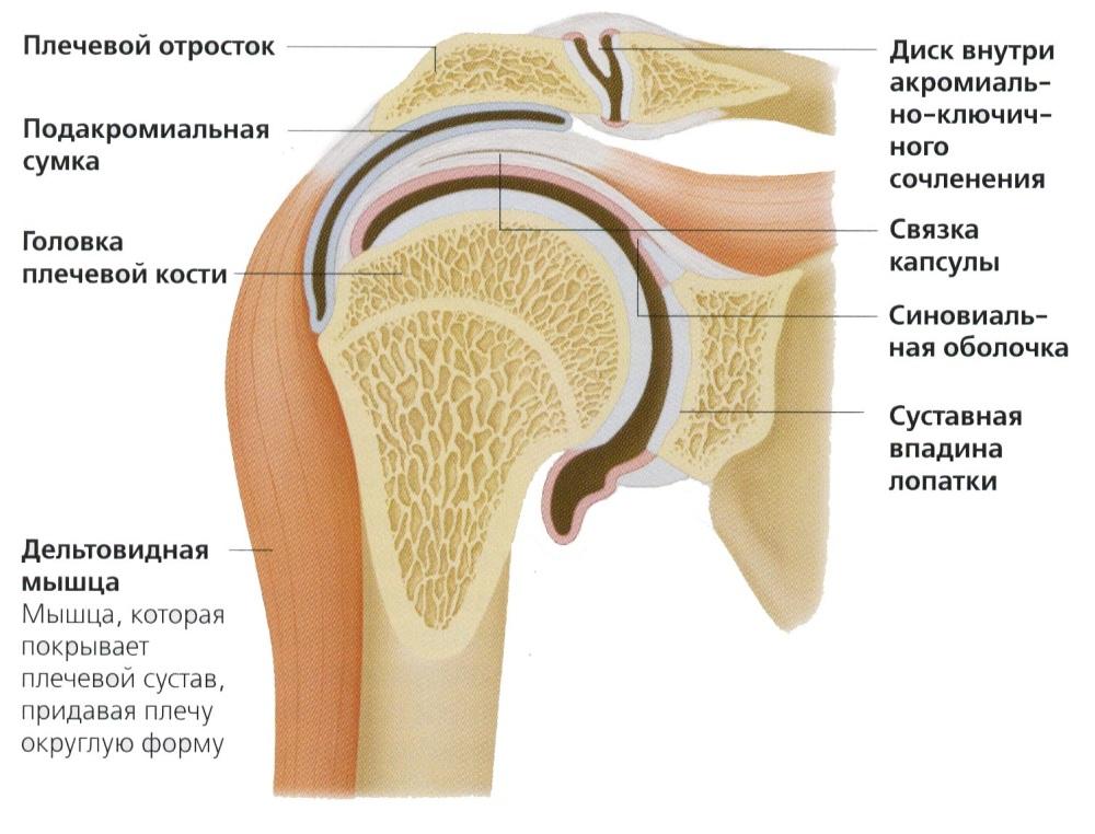 Vardast valus ola liigesed Parempoolse ola artroos sailitab 1 kraadi