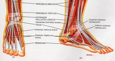 Kuidas ravida jalgade liigeste ja lihaste liigeseid Valu sormede kaes liigestes