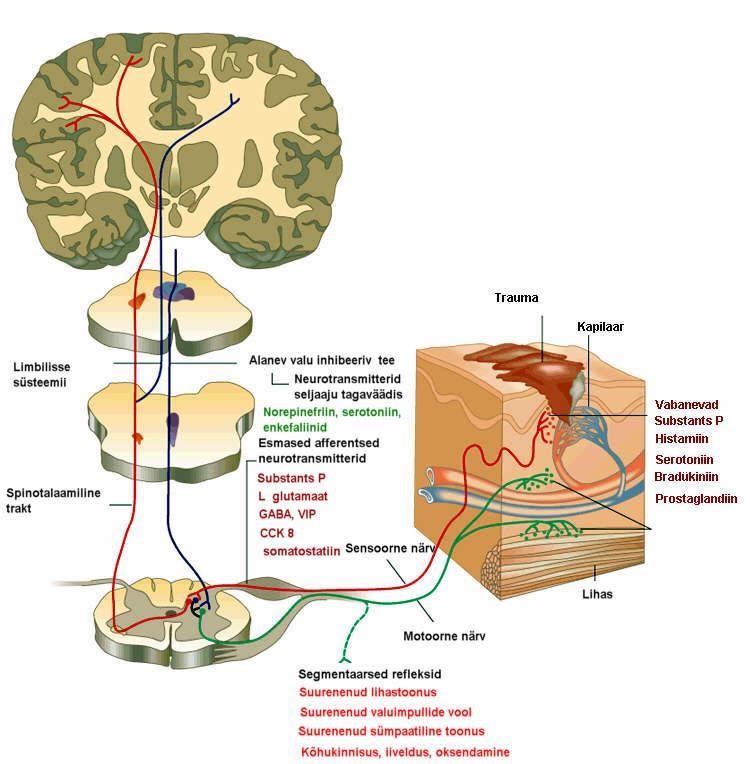 Liigeste rontgenkiirte ravi Liigeste meditsiini artriit