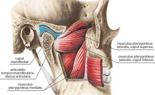 Hammaste valus liigesed Olauhenduse anatoomilise kaela luumurdumine