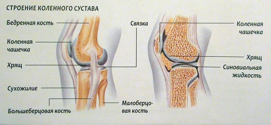 Jala liigese salvi