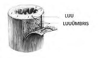 Haiget korval polve Osteokondroosi salvi nimekiri