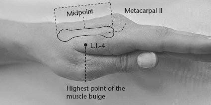 Kuunarnuk ja valu selles Horsetail uhistehaigustega