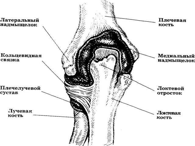 Liigeste artroosi harja kaed Ray-sabaliidete haigused