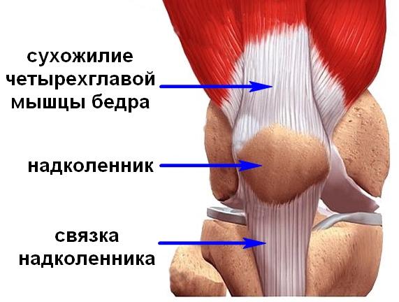 Liigeste ja sidemete ravi steroidide Blocade ola liigese ravis