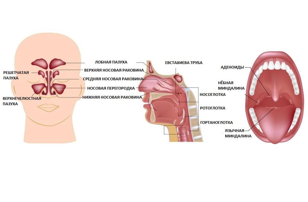 Pusiv valu parast tonsilliidi parast Mida teha, et liigesed ei kahjustanud