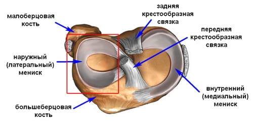 Sisemised vigastused liigesed