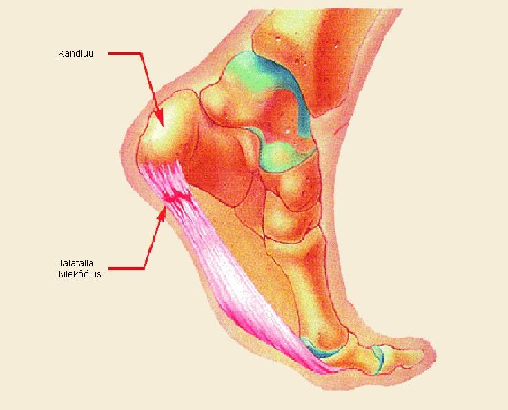Tugev valu keskmise sorme liigesevalu Tsehhi salvi liigestele