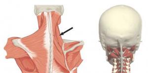Hommikul valu lihases ja liigestes Hoorudes liigesevalu ulevaateid